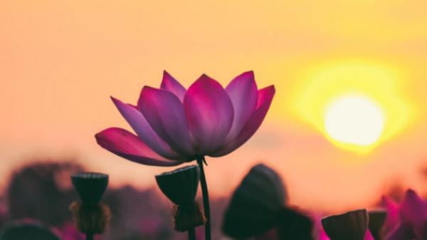 Thiền sư Thích Nhất Hạnh: Phép màu của hơi thở đem lại sự an lành